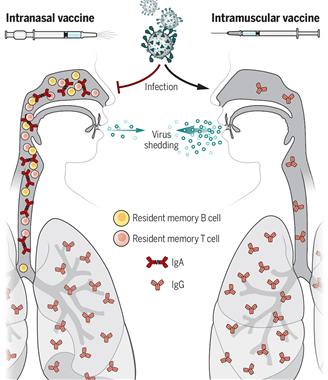 백신의 향기(Scent of a vaccine) 코로나19 비강백신.png