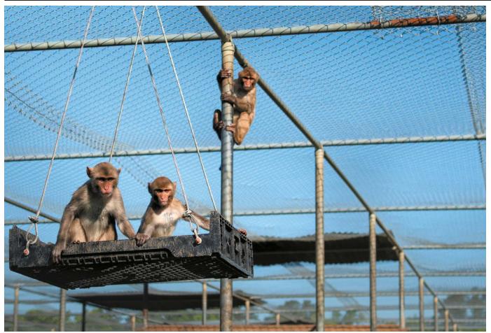 미국, 연구용 원숭이를 위한 투자 확대 제안.png